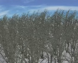 Create a Forest using XGEN in Maya