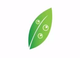 Design a Logo Leaf in Adobe Illustrator