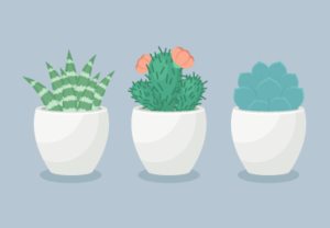 Draw a Trio of Succulents Plants in Illustrator