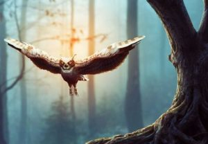 Create a Flying Owl with Adobe Photoshop
