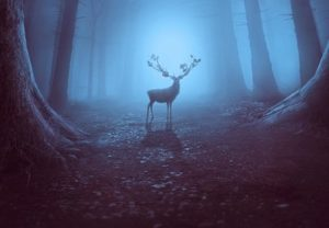 Create a Mysterious Forest Scene in Photoshop