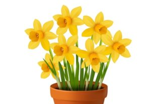 Draw a Vector Pot of Daffodils in Illustrator