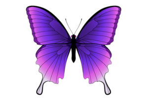 Butterfly Vector in Adobe Illustrator