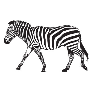 Vector Zebra Drawing Free download