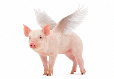 Add Wings to a Pig Photo in Adobe Photoshop