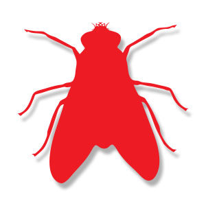 Fly Insect Silhouette Free Vector download